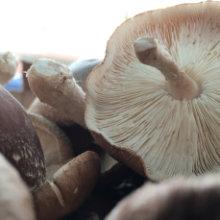 gfw_umami_mushroom_220x220.jpg