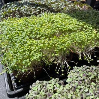 tiny-greens-greens-vendor-330x330.jpg