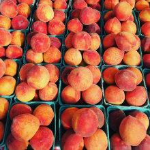 durham-produce-peaches-220x220.jpg